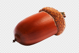 Acorn PNG Picture