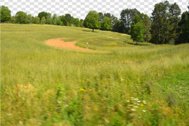 Sunny Grass Field PNG File