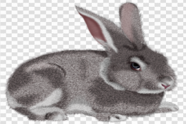 Bunny PNG