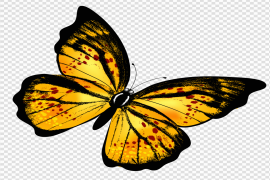 Flying Butterfly PNG Photos