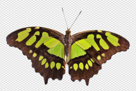 Flying Butterfly PNG Clipart