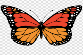 Vector Butterfly PNG Clipart
