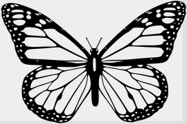 Vector Butterfly PNG Image