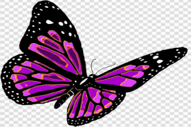 Pink Butterfly PNG Transparent Image