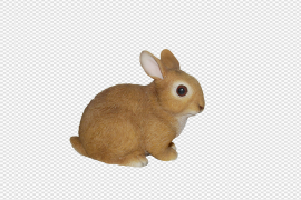 Baby Rabbits In Real Life PNG