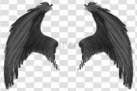 Wings PNG Transparent Image