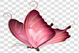 Pink Butterfly PNG Image