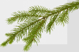 Christmas Branches Transparent Images PNG