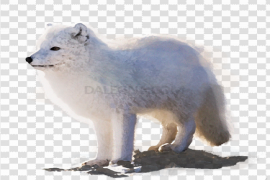 Snow Arctic Fox Background PNG