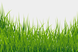 Summer Green Field PNG File