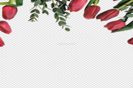 Red Tulip PNG Clipart