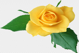 Yellow Rose PNG Clipart