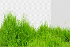 Summer Meadow PNG Transparent Image
