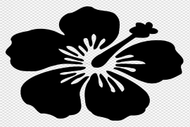 Flowers Silhouette Hibiscus PNG