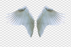 Angel Wings PNG Clipart