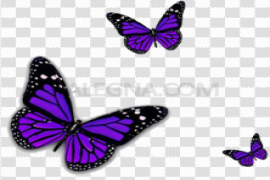 Purple Butterfly PNG Transparent Image