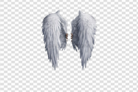 Realistic Angel Wings PNG Photos