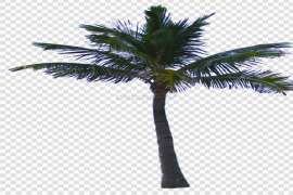 Jungle Tree PNG Clipart