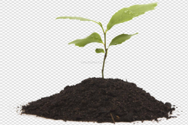Grow PNG Clipart