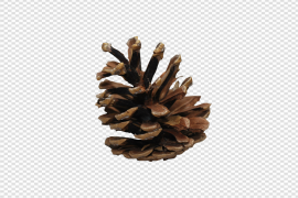 Christmas Pine Cone PNG HD