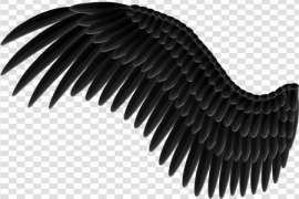 Wings PNG Pic