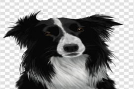 Border Collie PNG Image