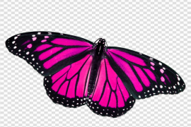 Pink Butterfly Transparent PNG