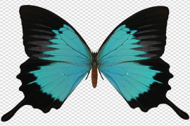 Black And Cyan Butterfly PNG