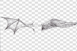 Half Wings Transparent Background