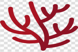 Red Coral PNG Transparent Image