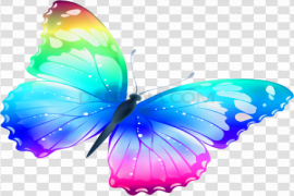 Vector Butterfly PNG Photos