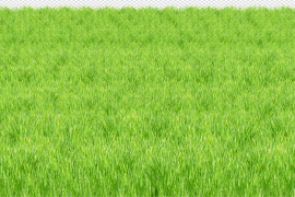 Sunny Grass Field PNG Image
