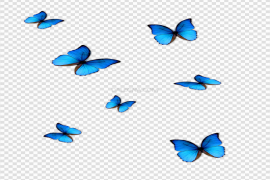 Blue Butterfly Transparent PNG