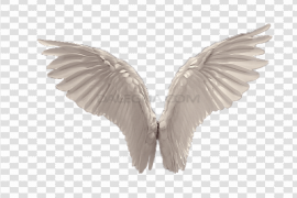 Wings PNG Picture