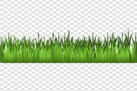 Spring Meadow PNG Photo