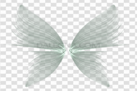 Wings Transparent Background