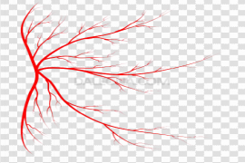 Red Veins PNG Image