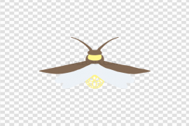 Firefly Transparent Background