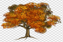 Fall Tree PNG Clipart