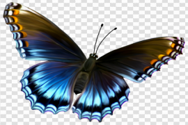 Amazing Butterfly PNG