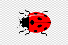 Vector Ladybug Insect Transparent Background