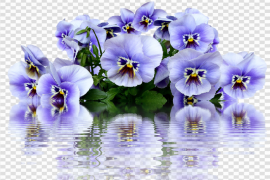 Spring Blossom Flower PNG HD