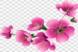 Blossom Flower Clipart PNG